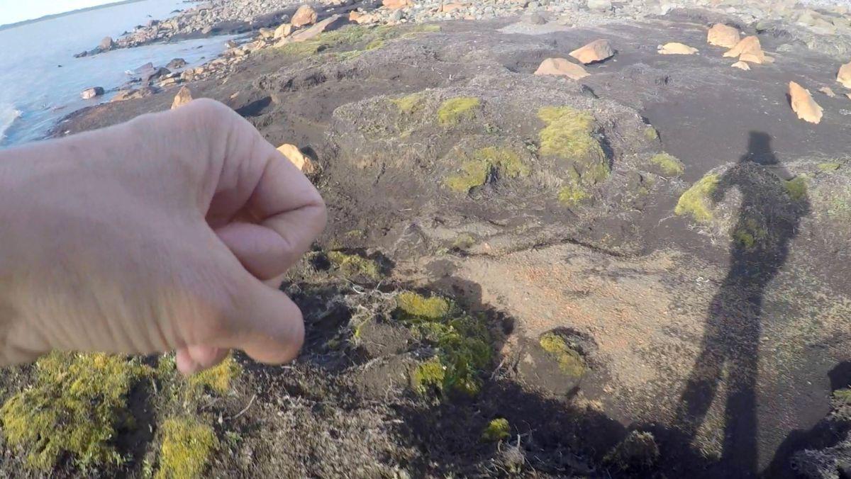Einskismannsland: Ríkir þar fegurðin ein? í Hafnarhúsi