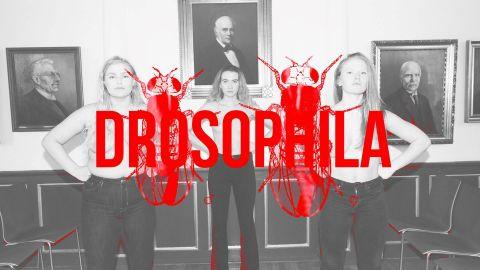Festival Hub: Drosophila - performance by Borghildur Indriðadóttir