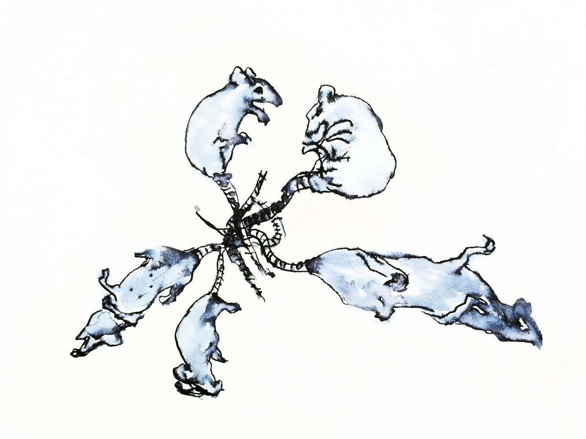 Gunnhildur Hauksdóttir: Rottukór