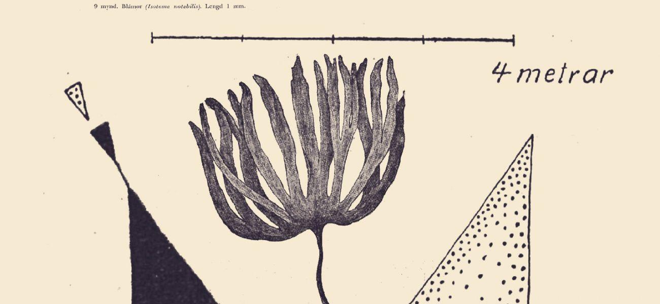 RÍKI – flóra, fána, fabúla