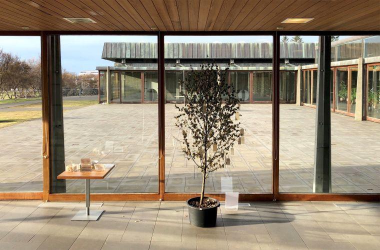 Wish Tree by Yoko Ono. Photo: Erik Hirt.